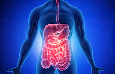 Leaky Gut Revive Dietary Supplement: Improve Your Digestion Quickly