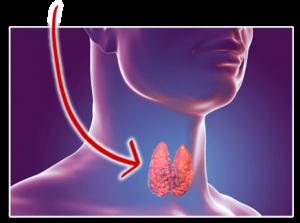 The OVER 40 Thyroid Detox Formula