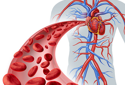 Total Blood Support Pills Reviews - An Healthy Blood Cells Support!