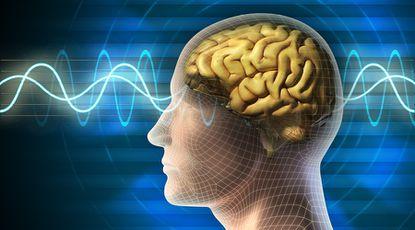 The Brain Booster Masterclass - Improve Your Brain Health