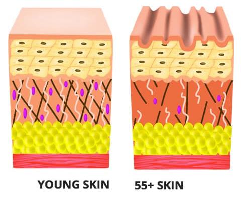 Micelle Liposomal Complete Collagen Ingredients