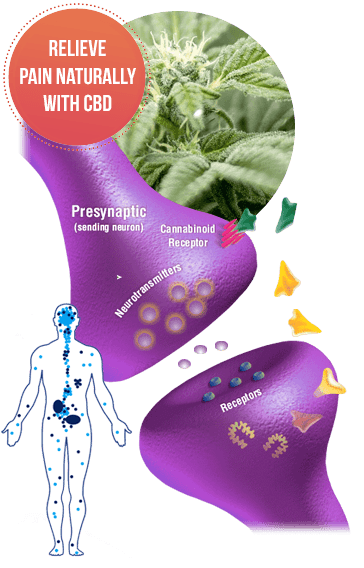 Natures Boost CBD Gummies Ingredients